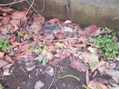 赤池公一 公式ブログ/紫陽花の芽 画像1