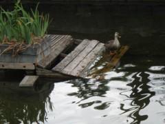 赤池公一 公式ブログ/平和な一日 画像1