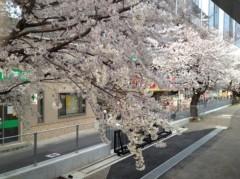 梅澤悠 公式ブログ/桜満開 画像1