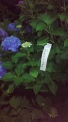 梅澤悠 公式ブログ/梅雨の花 画像1