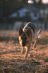 岡元慶太 公式ブログ/地雷探知犬ニーナ 画像1