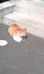 猫柳ロミオ 公式ブログ/新コーナー 画像1