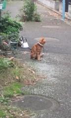 猫柳ロミオ 公式ブログ/ヒモ猫 画像1