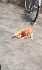 猫柳ロミオ 公式ブログ/今日のニャンコ 画像1