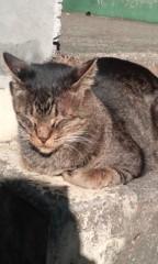 猫柳ロミオ 公式ブログ/なべおさみ似の 画像1