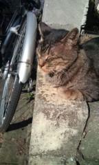 猫柳ロミオ 公式ブログ/なべおさみ似の 画像2