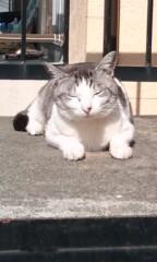 猫柳ロミオ 公式ブログ/今日のニャンコNo.4 画像1