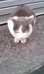 猫柳ロミオ 公式ブログ/今日のニャンコNo.2 画像1