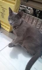 猫柳ロミオ 公式ブログ/逃げない飼い猫 画像2