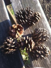 辻詩音 公式ブログ/自然はわたしの友達。 画像1