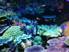 猪野由梨佳 公式ブログ/池袋サンシャイン水族館。 画像3