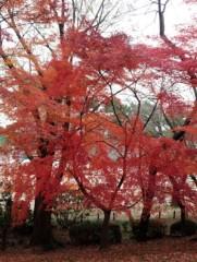 佐久間恵 公式ブログ/もみじのカーテン♪ 画像1