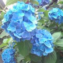 佐久間恵 公式ブログ/父の日。 画像1