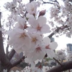 佐久間恵 公式ブログ/SAKURA 画像3