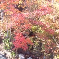 佐久間恵 公式ブログ/福島の紅葉♪ 画像1