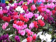 佐久間恵 公式ブログ/通りがかりのお花屋さん♪ 画像1