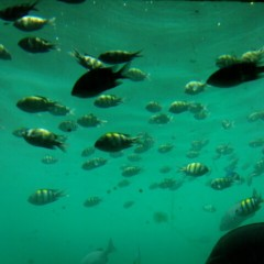 佐久間恵 公式ブログ/ペナン島 無人島へ渡った3日目。 画像3