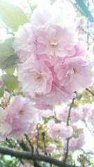佐久間恵 公式ブログ/桜さん。 画像2