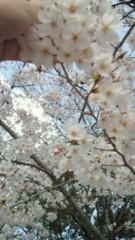 相川イオ 公式ブログ/桜 画像3