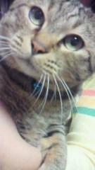 相川イオ 公式ブログ/うちのでぶ猫 画像2