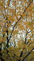 相川イオ 公式ブログ/紅葉 画像3