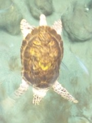 相川イオ 公式ブログ/水族館! 画像2