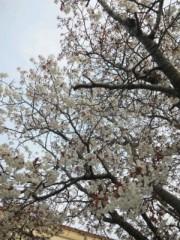 相川イオ 公式ブログ/桜さく〜♪♪ 画像1