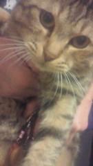相川イオ 公式ブログ/うちの猫ちゃん 画像1