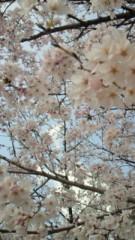 相川イオ 公式ブログ/桜 画像1