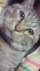 相川イオ 公式ブログ/うちのでぶ猫 画像1