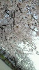 相川イオ 公式ブログ/桜 画像2