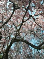 相川イオ 公式ブログ/桜好きな人まぢ見て!! 画像3