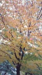 相川イオ 公式ブログ/紅葉 画像1