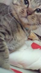 相川イオ 公式ブログ/相川さん家のでぶ猫 画像3